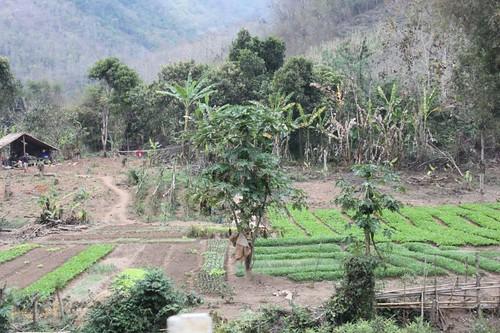 20120131_3221_local-farm