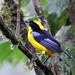Ecuador - 2012-03-27 - Bellavista