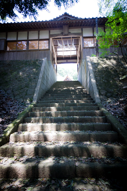 #76 The Giant Cryptomeria of Murahi Shrine