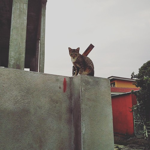 Cat on a wall looking at the camera