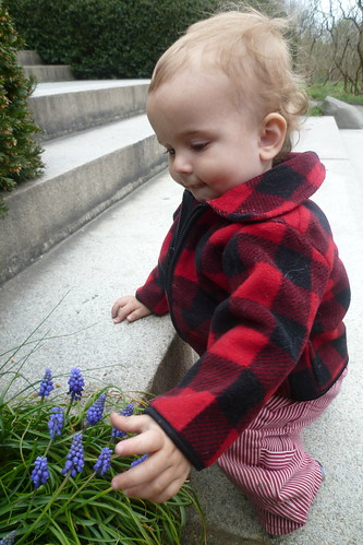 Petting The Grape Hyacinths