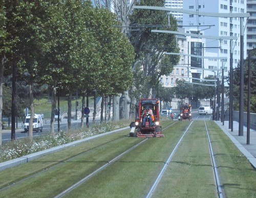 Mowing the tram tracks