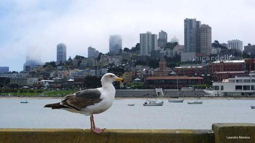 Passeio de bicicleta por São Francisco