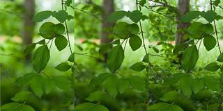 leaves F/4-8-20
