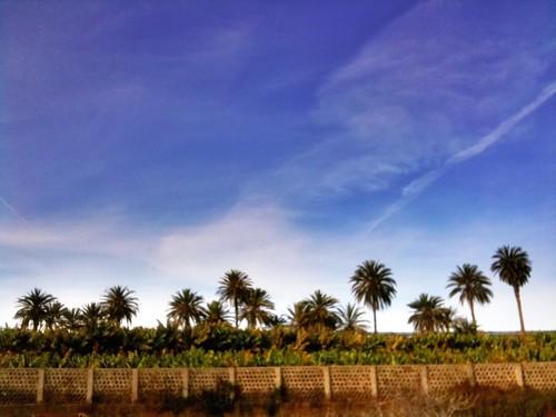 Palms Line