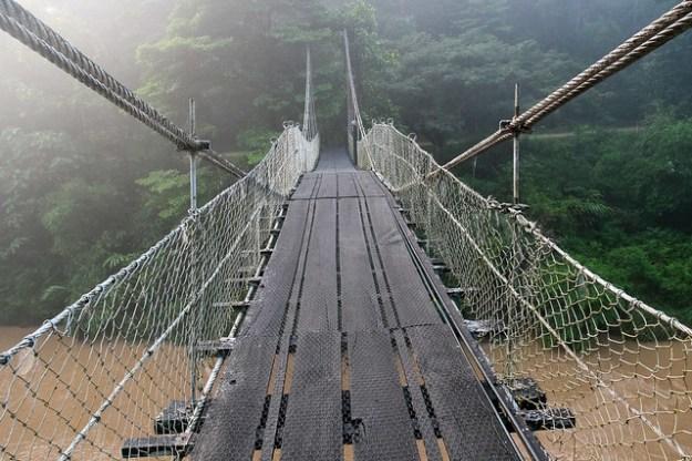Bridge. Danum Valley