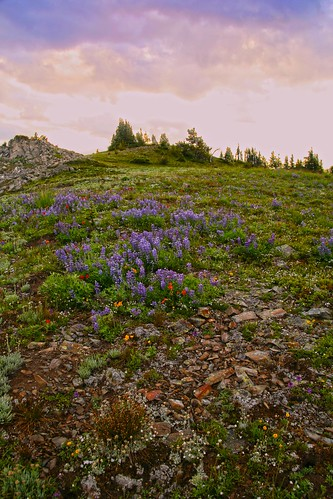 Devils Dome Wildflowers, Pasayten Wilderness  by i8seattle