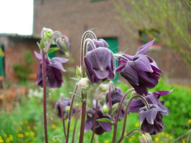 onbekende paarse bloem