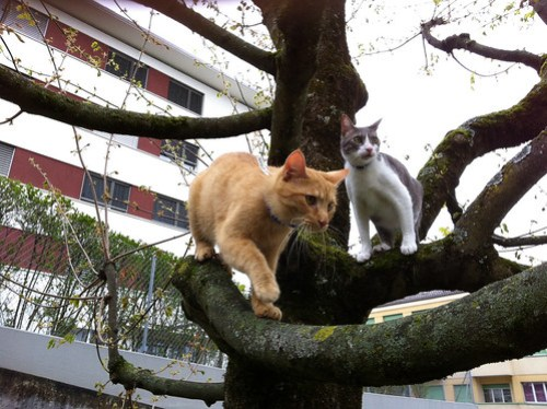 Tounsi and Safran in the tree 1