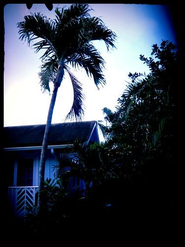 Coconut in the Backyard