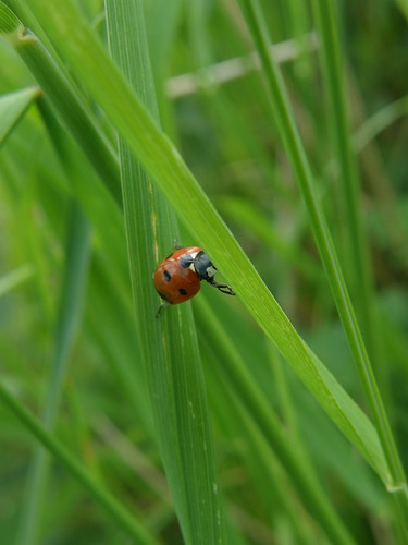 An acrobatic ladybird