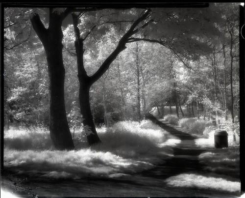 """Efke IR Trees"" by Sibokk"