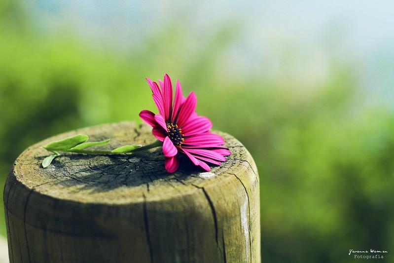 Una flor para ti