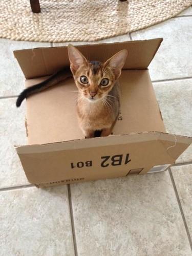 alli-box