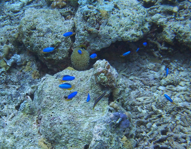 Wakatobi: Colours of the Reef (2/6)
