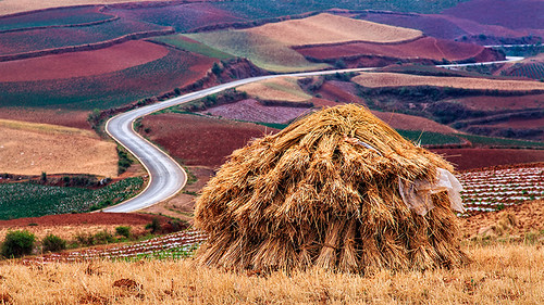 Hay pile, Red Earth, Yunnan, China
