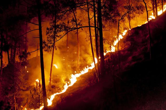 Forest Fire Shimla