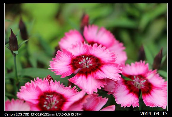 20140315_Flowers