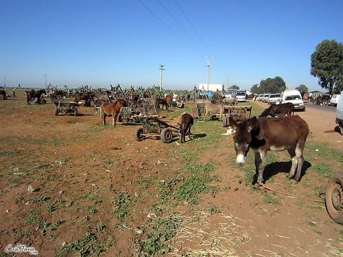 Mtal (Marruecos)