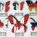 Gavin J R - Butterflies, Type L, A, U, Y, E, R