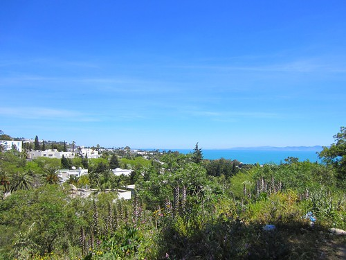 carthage view