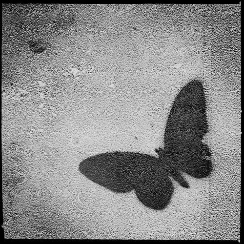 Silhouette by Darrin Nightingale