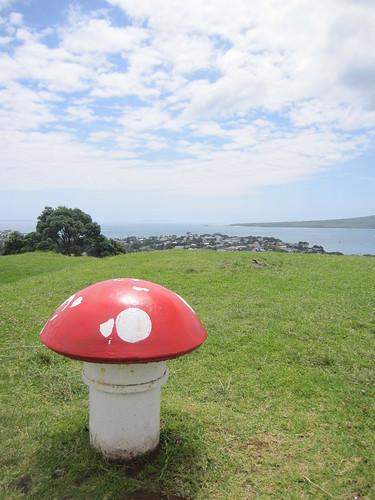 Cute mushroom decoration on Mount Victoria