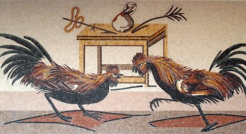 combattimento di galli