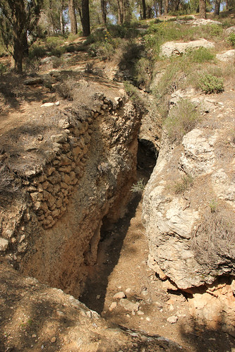 Trenches, Jerusalem Forest