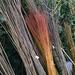 Rohmaterial Weide