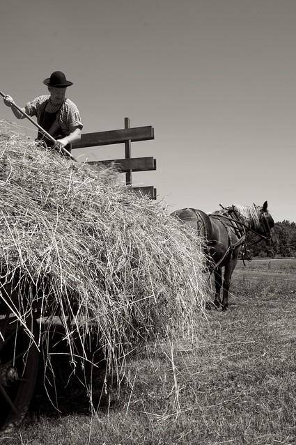 Making Hay 4