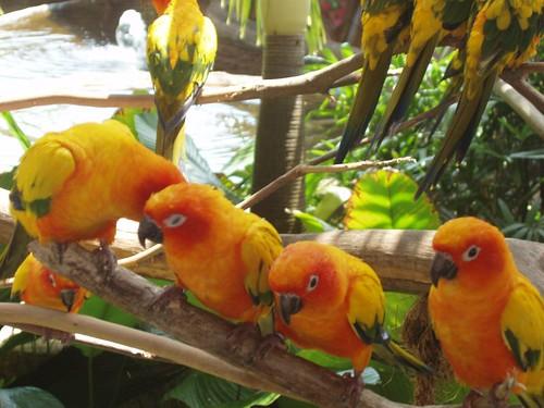 200907291035_Jurong-bird-park-sun-conures