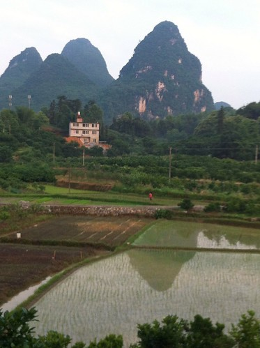Yangshuo rice paddy