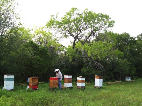 Hives looking good at Deadman