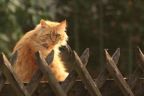 Katze in der Morgensonne - Cat in the morning sun