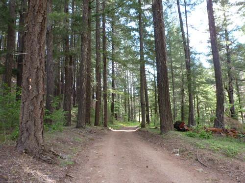 5-26-12 CA - Ruth Lake 43 Bike Ride
