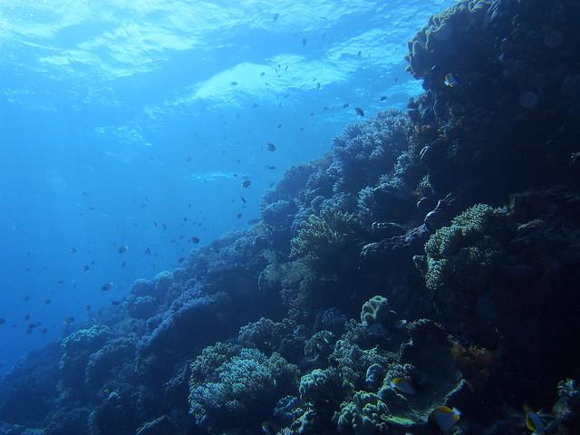 Wakatobi: Pristine Coral (2/6)