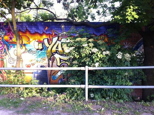 Elderflower bush by graffiti mural