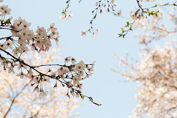 枝頭上的花朵,已不完整