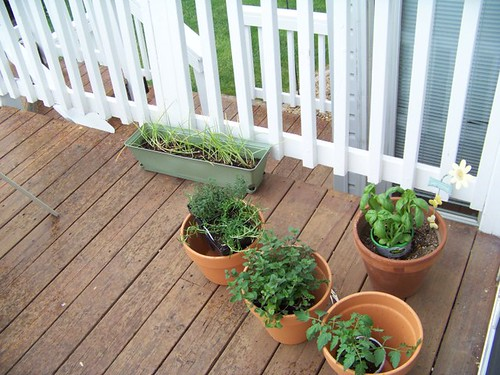 plants 010