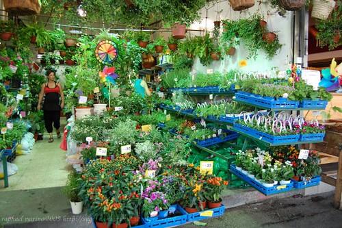 Shuk HaCarmel garden nursery