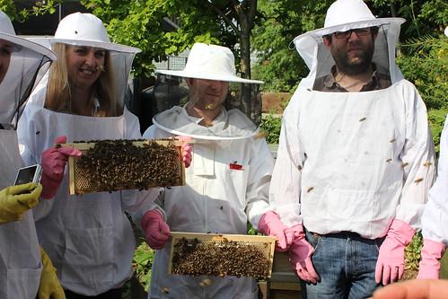 Bees etc 036