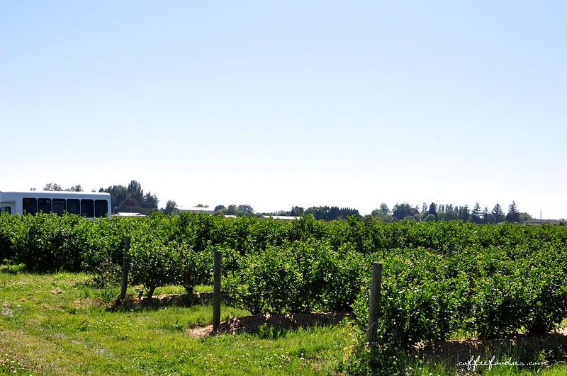 Emma Lea Farms Delta BC 00004