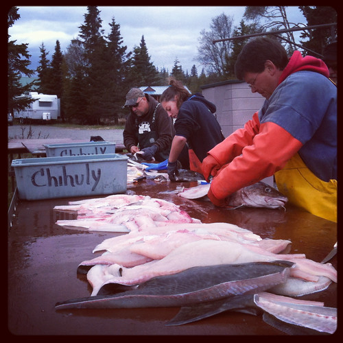 filleting the catch at ninilchik