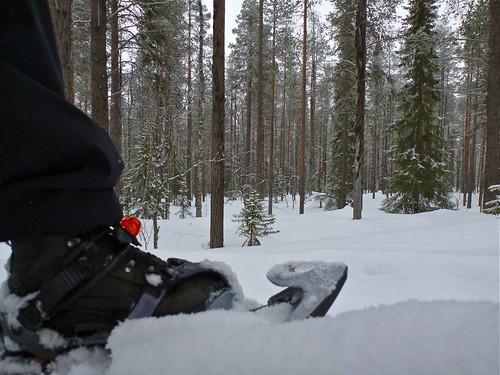Snowshoeing in Ylläs