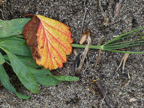 the flamboyant decay