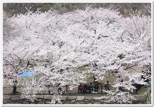 大阪城公園_從天守閣往西之丸看