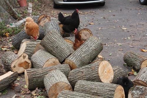 Wood, glorious firewood
