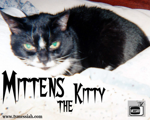 mittens the kitty