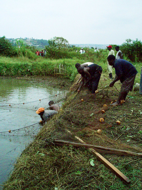 Net fishing in the center's pond.
